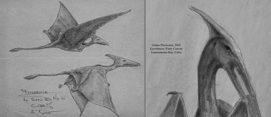 Two sketches of living pterosaurs